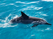 dolphin_excursions03