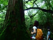 白谷水雲峡&太鼓岩トレッキング04