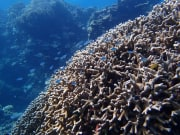 Tropical coral reef filled with bright fish