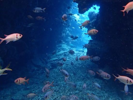 Full Day Scuba Dive Tours In English For C Card Holders In Ishigaki
