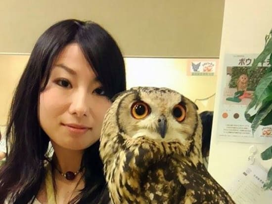 Japanese woman holding a large owl at a cafe