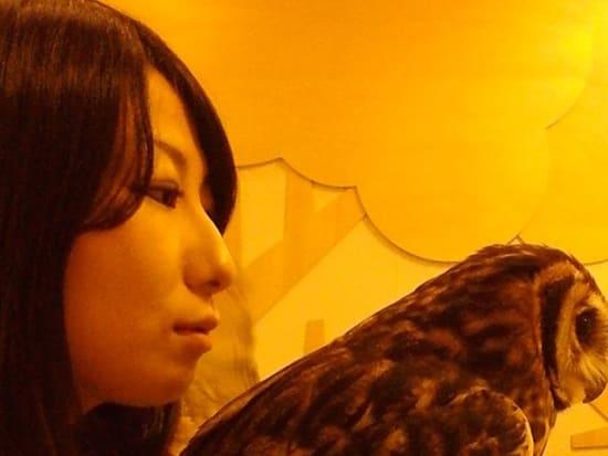 フクロウ16