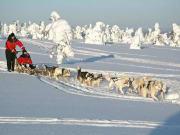 Husky_sled_by_Lapland_Safaris