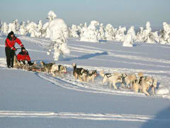 Husky_sled_by_Lapland_Safaris