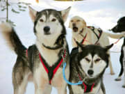 Husky_team_ready_