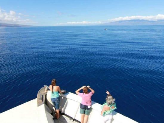 Hawaii_Maui_Maui Maritime_Whale Watching