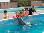 DolphinRoyalSwim2