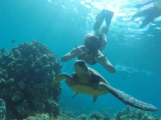 Embark On An Aquatic Adventure Along Maui S West Coast For A Snorkel Sail Among The Wonderland Of Tropical Marine Life Breakfast Lunch And Open Premium