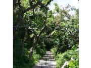 来間島の遊歩道(加工)1