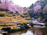 退蔵院桜「余香苑」昼