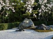退蔵院石庭桜