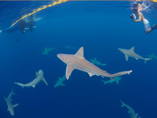 View All Images Shark Sighting Guarantee
