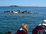 RIB Speedboat with Seal safari