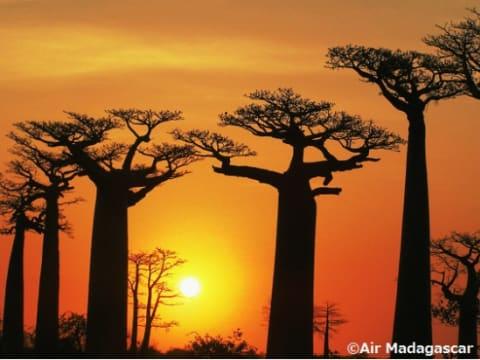 一生に一度の旅「マダガスカル」