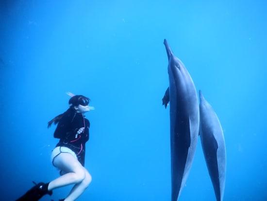 masashi_dolphin