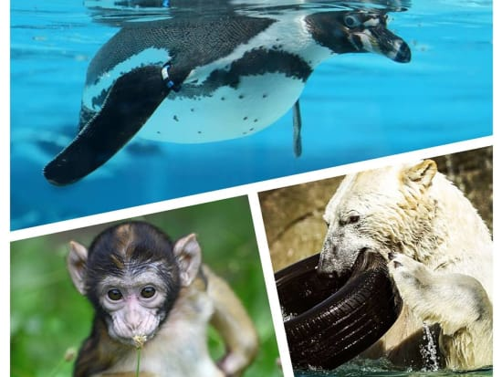 zoo Mulhouse