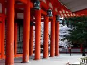 平安神宮(春)