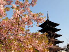 Kyoto spring charter
