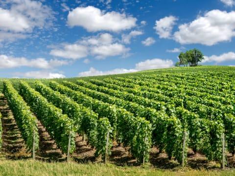 シャンパーニュ (ワイン/シャンパンツアー)   パリの観光・ツアーの予約 VELTRA(ベルトラ)