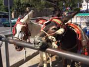 Taxi donkeys