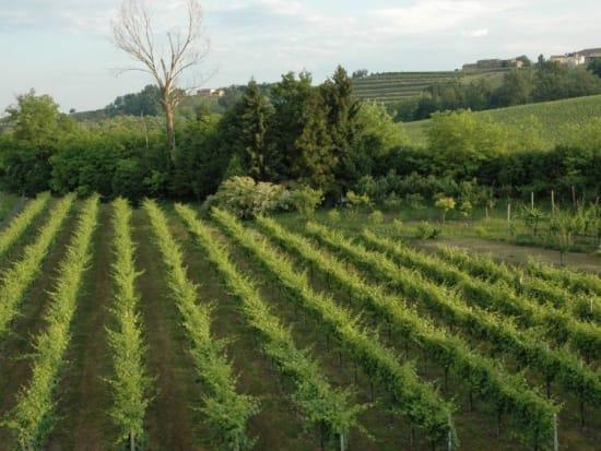 ブドウ畑 (6)