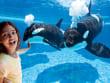 Shamu Underwater Viewing_noWall with GirlCB