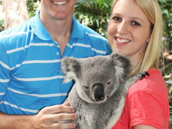 koalahugs2