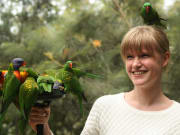 lorikeet_feeding