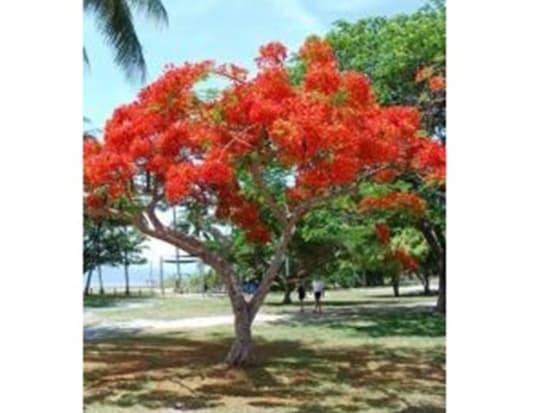sun_tree250