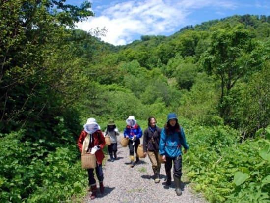 山菜採りハイキング 5.