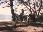 turtle_bay_horse02