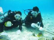 水納島ビーチ体験ダイビング