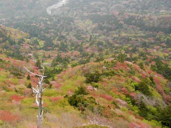 苔むす森(白谷雲水峡コース)