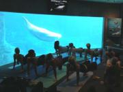 Yoga_Dolphin