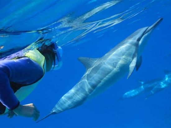 Experience An Unforgettable Underwater Interaction
