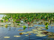 See the vast wetlands of the Northern Territory