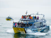 Whale Watch Vessels & Pax