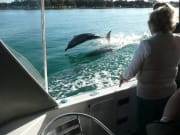 Boat_&_Dolphins_2012_D