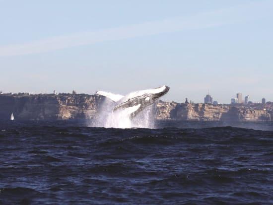 se-whale2