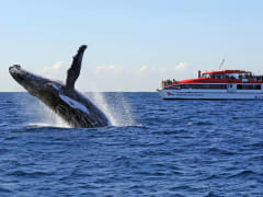 Whale Watching Cruise from Sydney Harbour