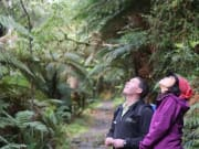 Milford track bird watching Trips Tramps_1