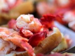 Lobster & Beer Lovers Sail