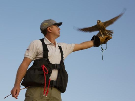 Falconry (3)