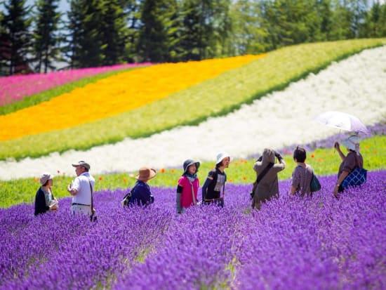Image result for lavender fields hokkaido