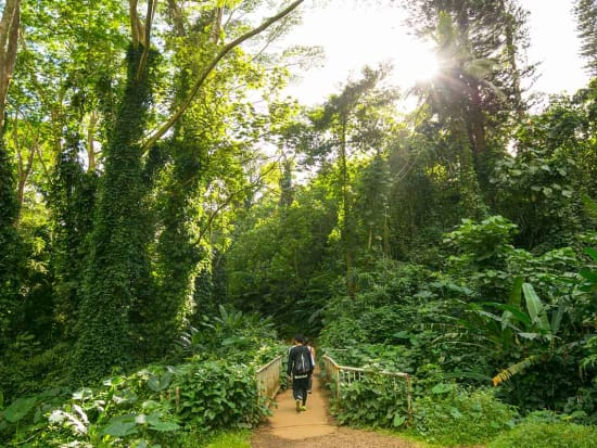 Oahu_Nature and You_Hiking trail