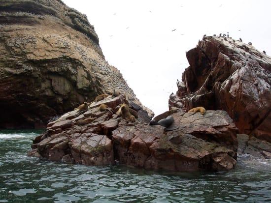 Wildlife_on_ballestas_islands