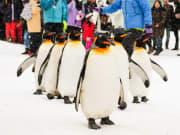 Asahiyama Zoo penguins cropped