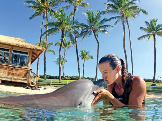 USA_Hawaii_Waikoloa-Dolphin-Swim