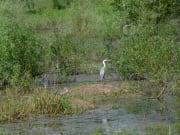 スレバルナ野鳥