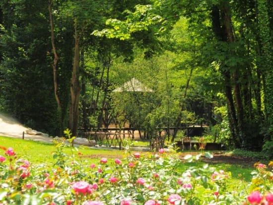 Leonardo-s garden